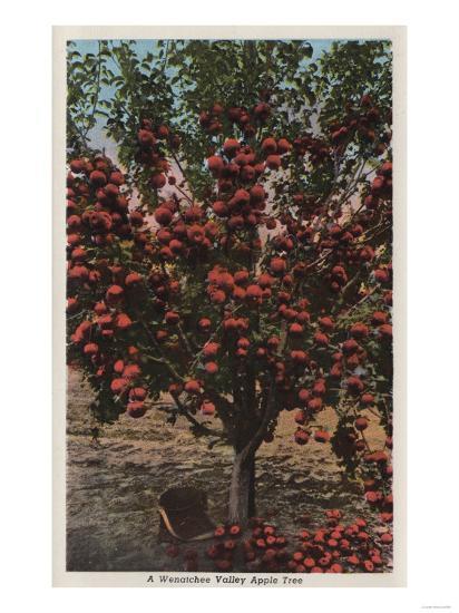 Wenatchee, WA - A Wenatchee Valley Apple Tree-Lantern Press-Art Print