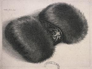 A Large Muff with a Band of Brocade, 1647 by Wenceslaus Hollar