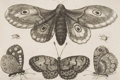 A Moth, Three Butterflies, and Two Beetles