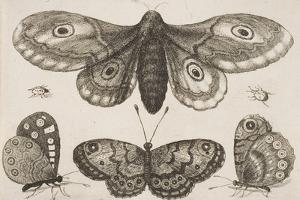 A Moth, Three Butterflies, and Two Beetles by Wenceslaus Hollar