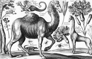 Animalium, Ferarum Et Bestiarum, Engraved by David Loggan, 1663 (Engraving) by Wenceslaus Hollar