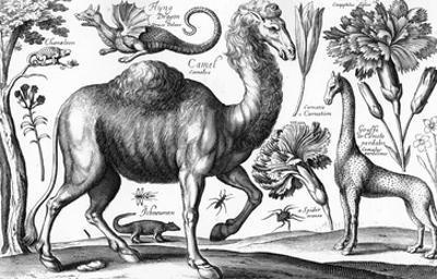 Animalium, Ferarum Et Bestiarum, Engraved by David Loggan, 1663 (Engraving)