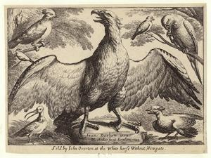 Eagle and Other Birds by Wenceslaus Hollar