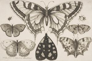 Five Butterflies, a Moth, and Two Beetles by Wenceslaus Hollar