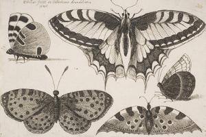 Five Butterflies by Wenceslaus Hollar