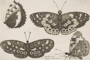 Four Butterflies by Wenceslaus Hollar