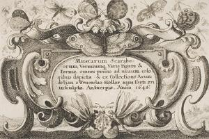 """Frontispiece, Plate 1 from the Series """"Muscarum, Scarabeorum Vermiumque Varie Figure and Formae"""" by Wenceslaus Hollar"""