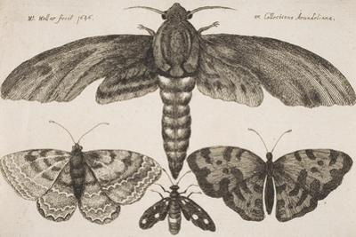 Moth and Three Butterflies