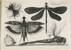 The Set of Butterflies, One of Twelve, 1646 by Wenceslaus Hollar