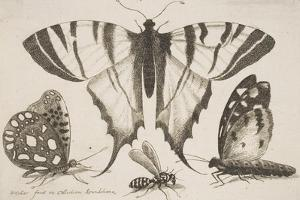 Three Butterflies and a Wasp by Wenceslaus Hollar