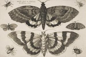 Two Moths and Six Insects by Wenceslaus Hollar