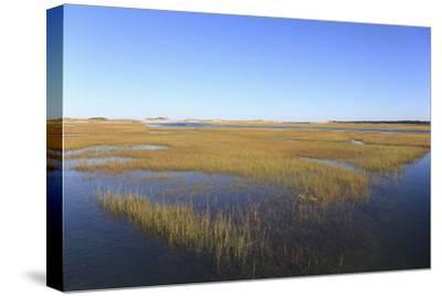 Salt Marsh, Sandwich, Cape Cod, Massachusetts, New England, United States of America, North America