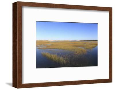 Salt Marsh, Sandwich, Cape Cod, Massachusetts, New England, United States of America, North America