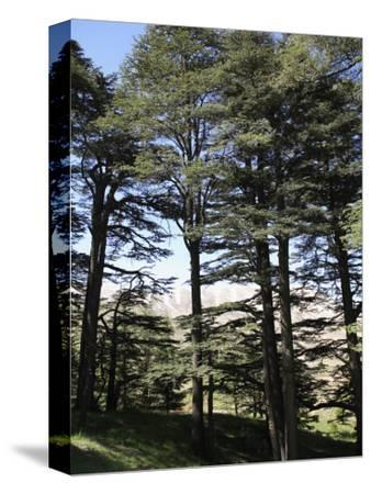 The Cedar Trees of Bcharre, Qadisha Valley, Lebanon