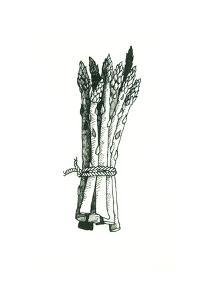 Asparagus by Wendy Edelson