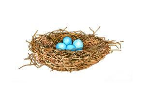 Nest by Wendy Edelson