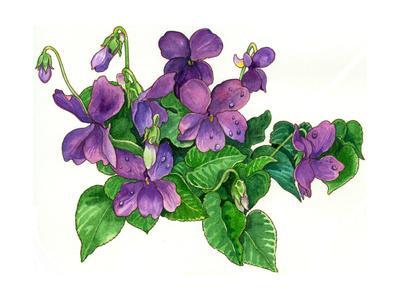 Violets Bunny