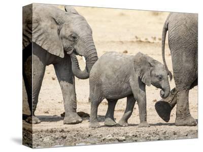 Namibia, Etosha NP. Baby Elephant Walking Between Two Adults
