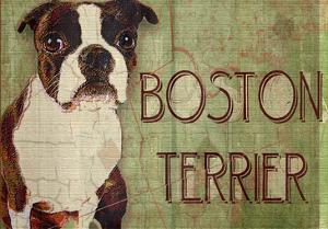 Boston Terrier by Wendy Presseisen