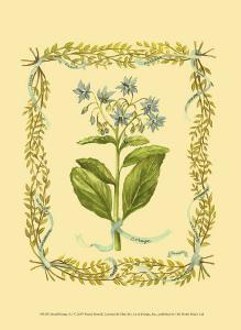 Borage by Wendy Russell