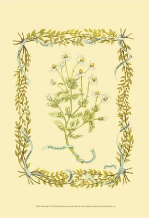 Chamomile by Wendy Russell