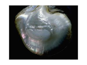Inside of a pearl oyster by Werner Forman