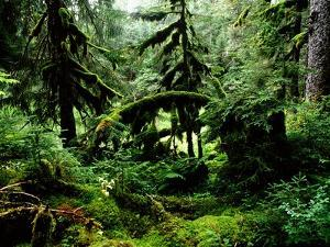 Lush rain forest bordering Prince William Sound by Werner Forman