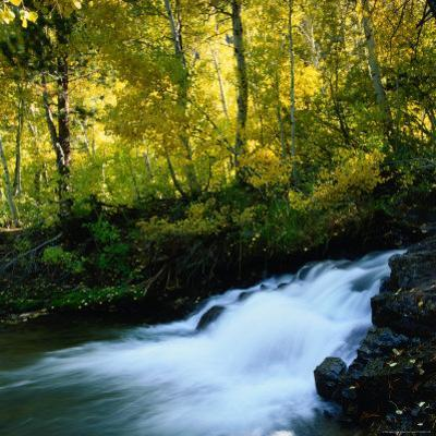 Stream Flowing Past Leafy Trees in Sierra Nevada Mountains, Ansel Adams Wilderness Area, USA