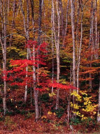 Wonderful Autumn Colours of Green Mountains in Vermont, Vermont, USA