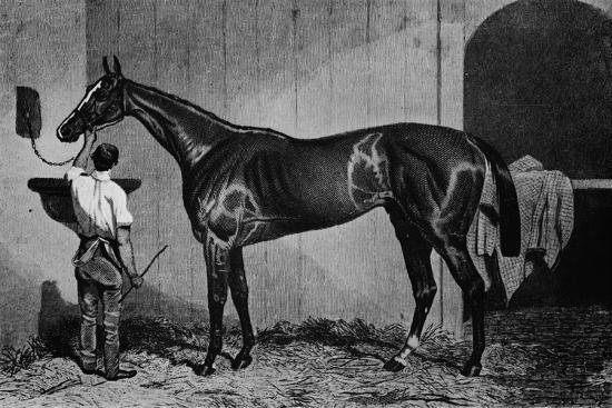 'West Australian', 1850-1870, (1911)-Unknown-Giclee Print