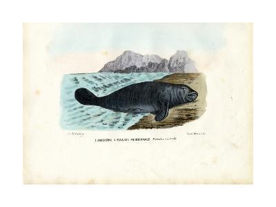 West Indian Manatee, 1863-79-Raimundo Petraroja-Giclee Print