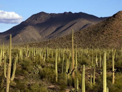 West Unit of Saguaro National Park-Mark Newman-Photographic Print