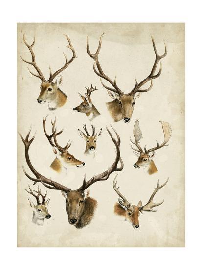 Western Animal Species II-0 Unknown-Art Print