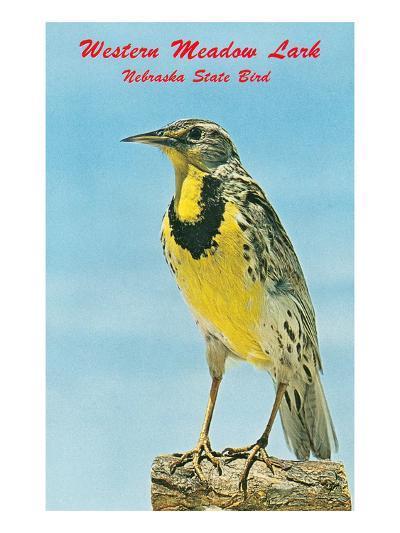 Western Meadowlark--Art Print