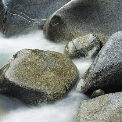 Westland National Park, South Island, New Zealand-Micha Pawlitzki-Photographic Print