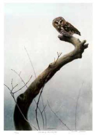 Wet Spring - Saw Whet Owl-Michael Dumas-Limited Edition