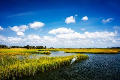 Wetland Herons II-Alan Hausenflock-Photo