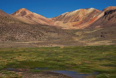 Wetland in the Atacama-JeremyRichards-Photographic Print