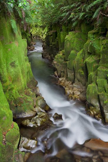 Whaiti-Nui-A-Toi Canyon, Whirinaki Forest Park, Bay of Plenty, North Island, New Zealand-Rainer Mirau-Photographic Print