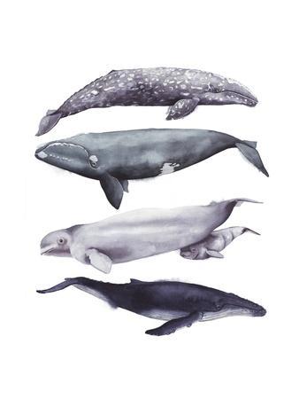 https://imgc.artprintimages.com/img/print/whale-stack-i_u-l-q11kfhb0.jpg?p=0