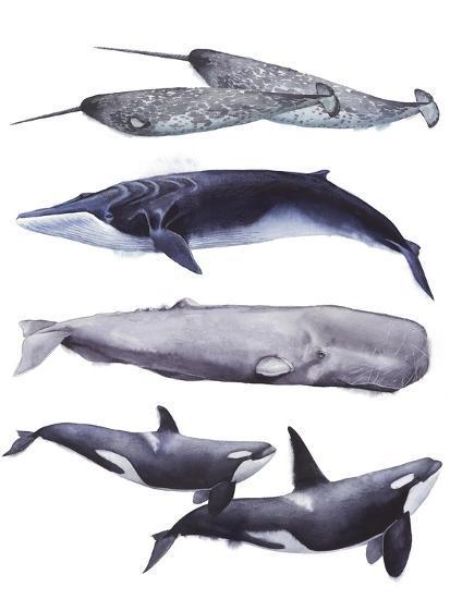 Whale Stack II-Grace Popp-Art Print