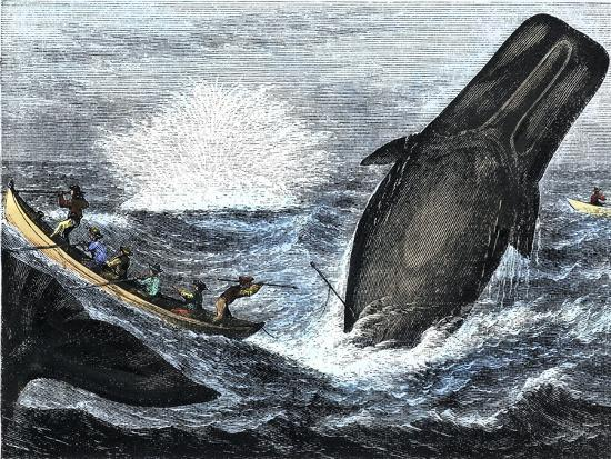 Whale Struck by a Harpoon While Breaching, c.1800--Giclee Print