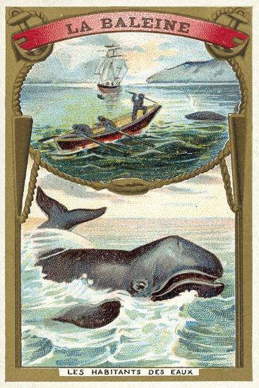 Whale--Giclee Print