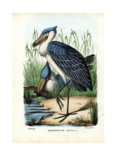Whalehead, 1863-79-Raimundo Petraroja-Giclee Print