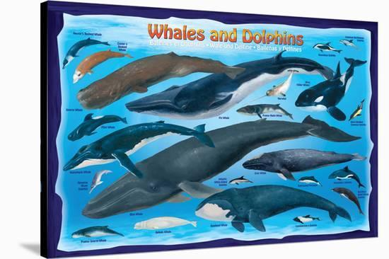 Whales and Dolphins for Kids--Stretched Canvas Print