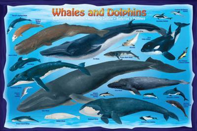 Whales and Dolphins for Kids