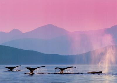Whales--Art Print