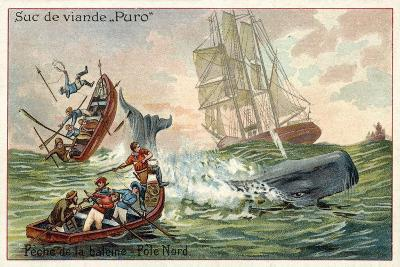 Whaling in the Arctic--Giclee Print