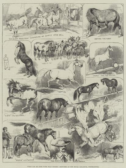 What Can Be Done with Wild Horses, Sketches at the Royal Aquarium, Westminster-Alfred Courbould-Giclee Print