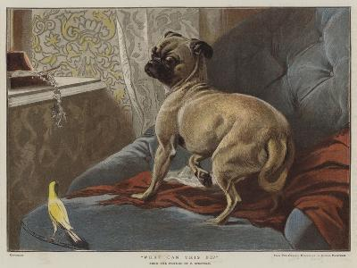 What Can This Be?-Carl Constantin Steffeck-Giclee Print